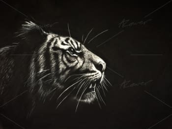A hand drawn picture of a tiger.