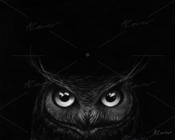 A hand drawn picture of a owl.